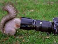 Squirrels Extreme Close Up