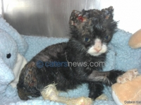 KITTEN DOUSED IN PETROL
