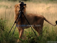 Lion Tries To Steal A Camera