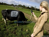 Cow Barcode