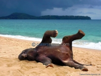 ELEPHANT ROLLING IN THE SAND