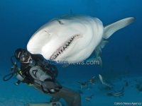 Diver Hand Feed Sharks
