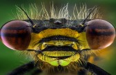 Incredible Close Creepy Crawlies