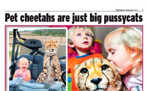 cheetah express