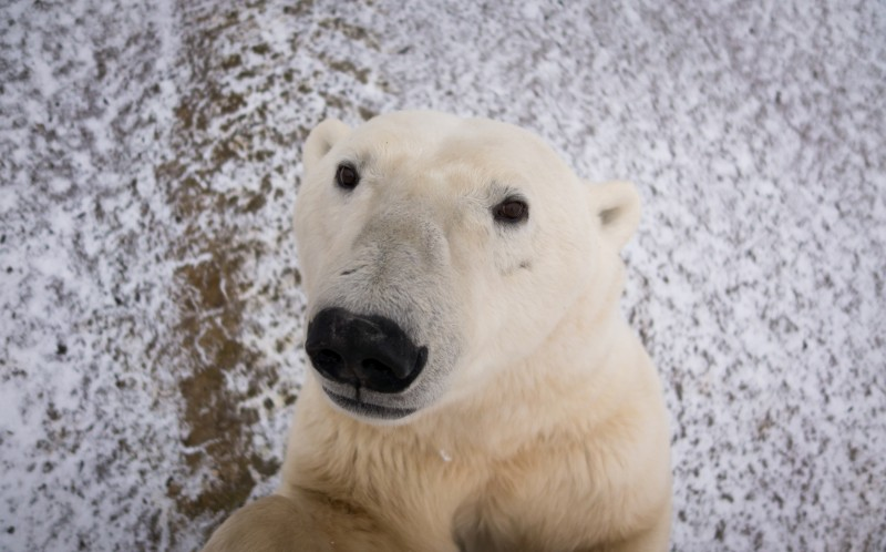 This is the moment a polar bear got up close and personal with a camera