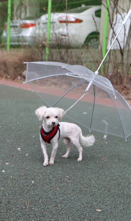 Amazing Dog Umbrella