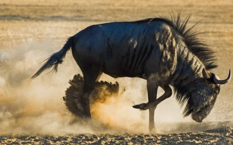 The images were taken during the photographer's family vacation to Kgalagadi Transfrontier Park.