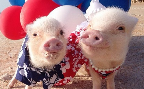 Teacher Melissa will spend her time dressing up her cheeky pet pigs and then posting pictures online.