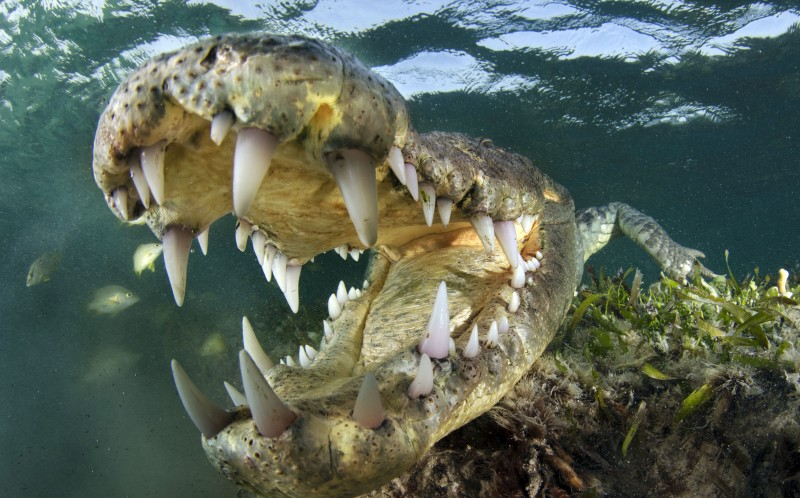 The 2.5metre croc  offered Andy an amazing face-to-face encounter