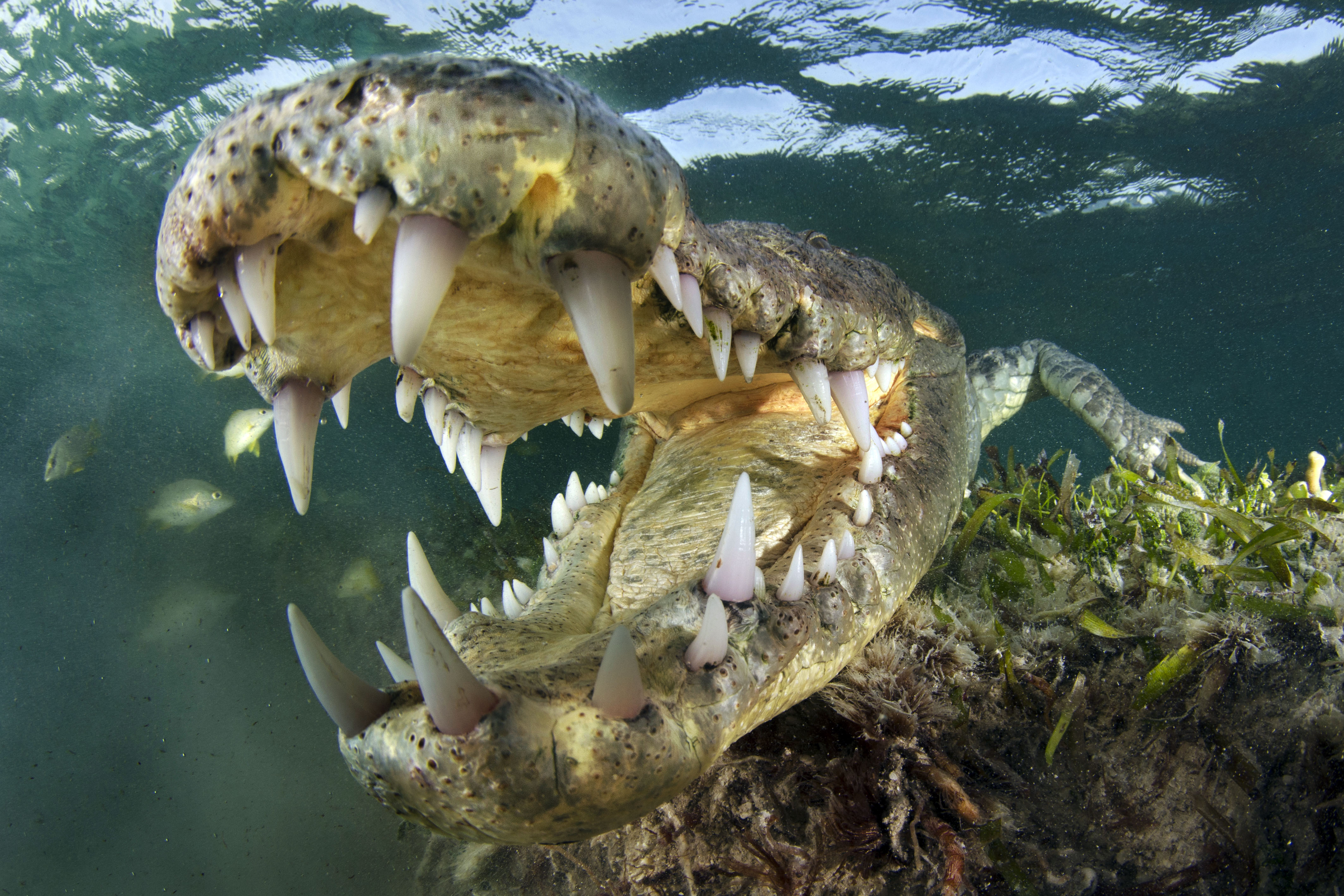 Photographer Captures Amazing Crocodile Close Ups Caters