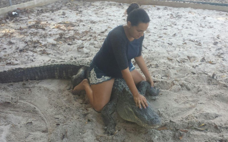 Martha, who is seven months pregnant, refuses to give up alligator wrestling