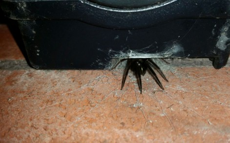 """Mike, 41 from Cwmbran, said: """"It was devouring another smaller spider – they're proper little cannibals."""