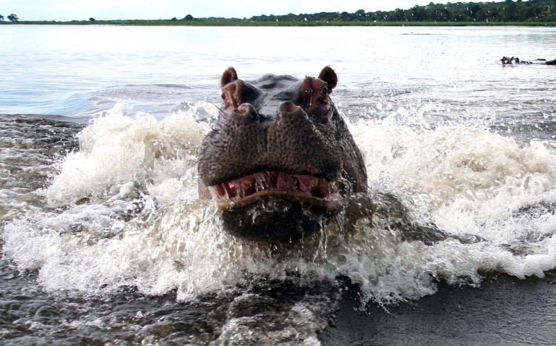 Terrified couple capture photograph of angry hippo after it