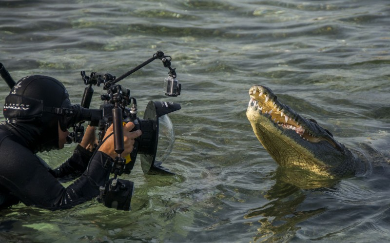 """The experienced wildlife photographer said: """"They stayed around all day while we teased them up to our cameras."""""""