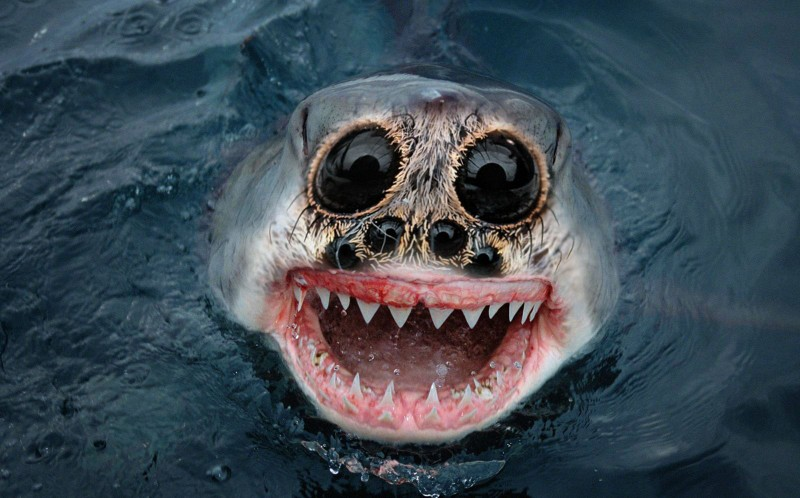 A spider shark? The photos,  created by Sarah Derememer, were doctored using Photoshop
