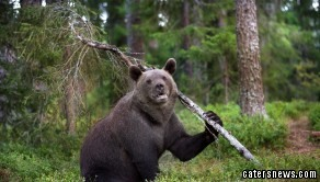 The brown bear looks uncannily like Baloo from Jungle Book