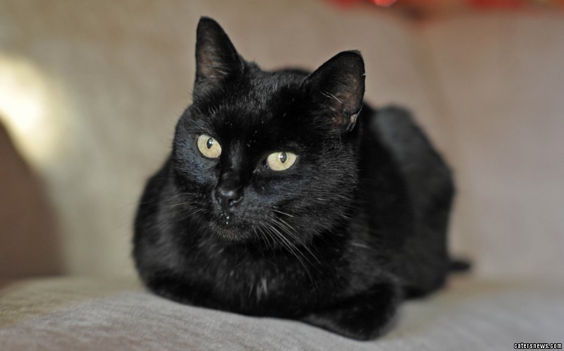 Five-year-old cat Percy  had been missing for a decade