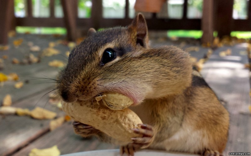 "Pandrea, who snaps the squirrels in her garden in Illinois, USA, said: ""They're nature's beautiful creatures but I love them as if they're my own."""