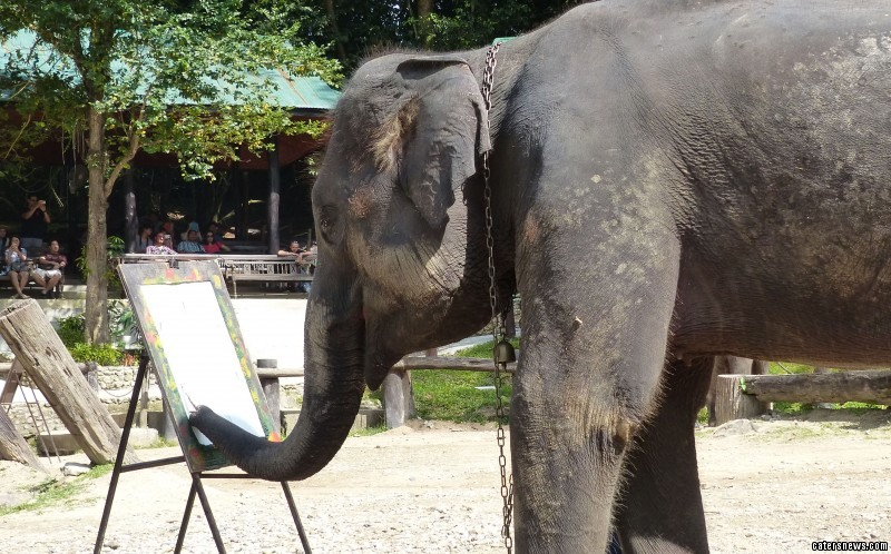 The elephants produce the artworks unaided