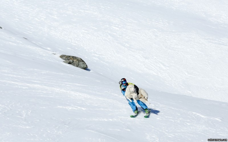 Sheep saved by skier