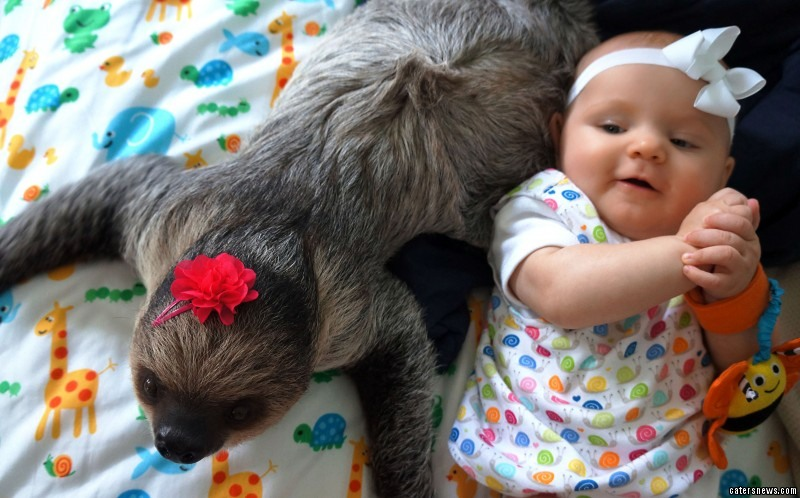 Baby Alia and Daisy the sloth are the best of friends