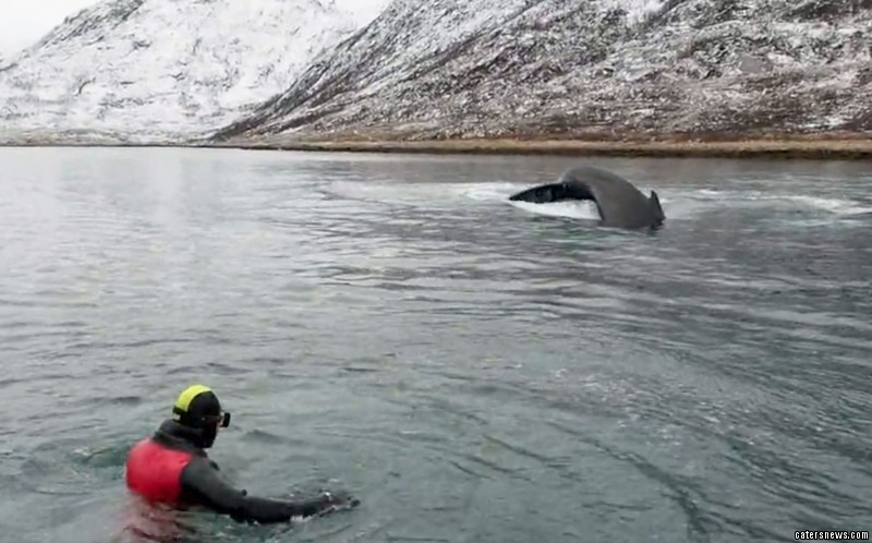 Vidar Paulsen was splashing about when a whale came swimming by