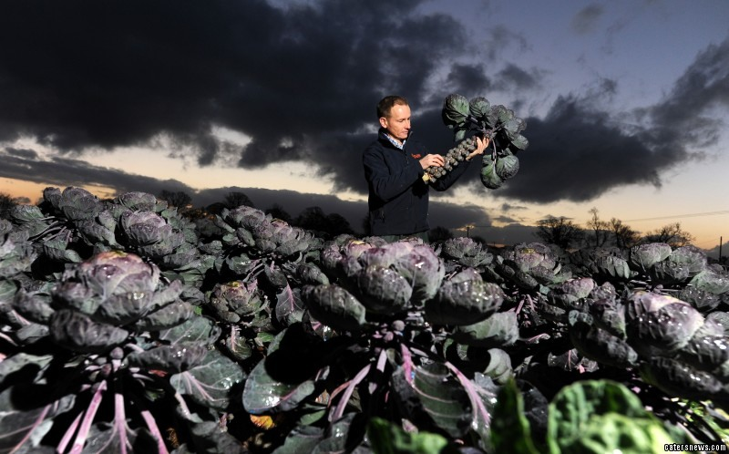 "Farmer, George Read from Staples Vegetables Ltd, said: ""These red Brusselberry sprouts are sweeter than your average sprout and are all carefully hand selected by our farmers in Lincolnshire."""