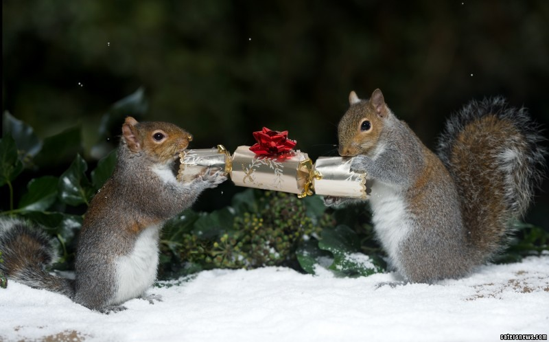 The critters can be seen sharing a Christmas cracker
