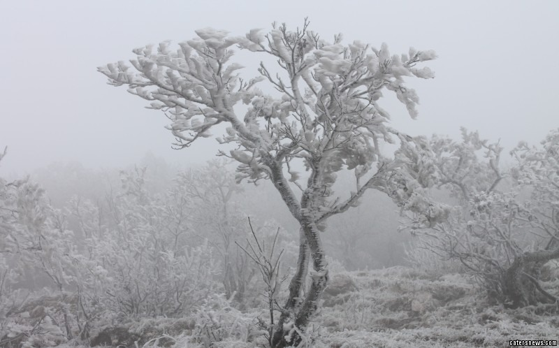 The rare ice storm is known as 'white death'