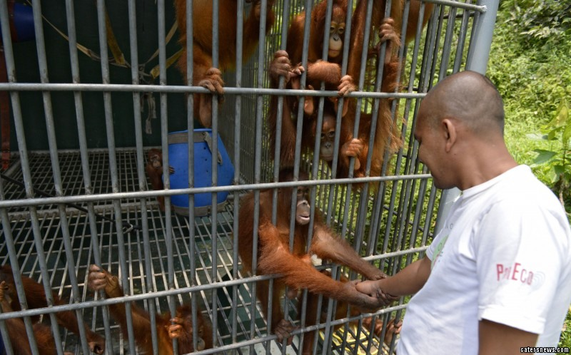 The pictures show orphaned babies quarantined behind bars