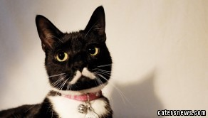 Meowseph Stalin lives in Oslo, Norway