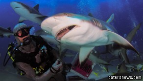 Photographer Jan Phillip Morton snapped divers gracefully giving the swarming sharks a bite to eat