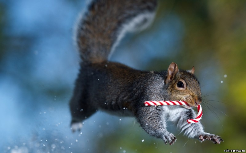 One of the creatures dashing through the snow with a candy cane