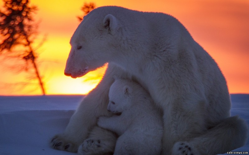 """David said: """"The cubs are incredibly cute are hilarious to watch, seeing them playing never fail to melt your heart."""""""