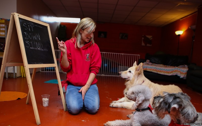 The Academy 4 Dogs in Stockport is pledging to whip your pooch into shape