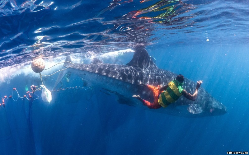 Chris Rohner and Clare Prebble helped free the tangled sharks