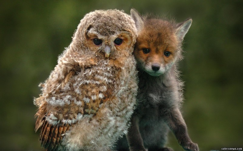 It might be a dog eat dog world but - as these pictures prove - best friends come in all shapes and sizes.These fluffy, feathered and furry friends are making no secret of the fact that they're perfect pals even though their choice of chum might seem questionable at first glance.