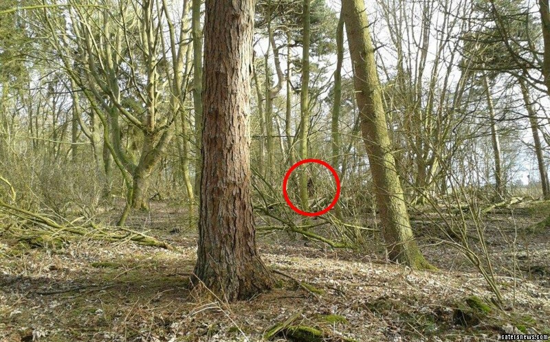The creepy picture shows what appears to be Bigfoot lurking in the woods