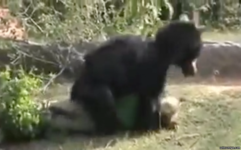 The Indian man was mauled to death by the bear