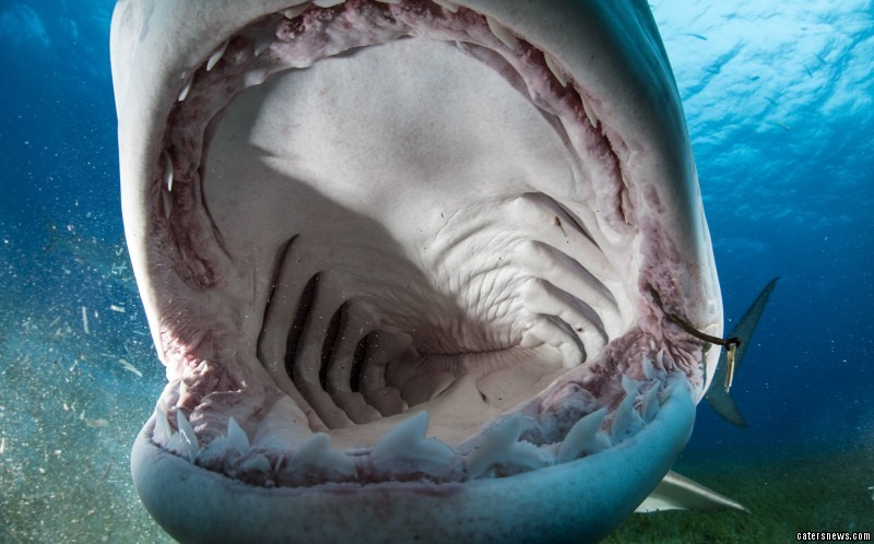 Photographer looks inside the mouth of a shark
