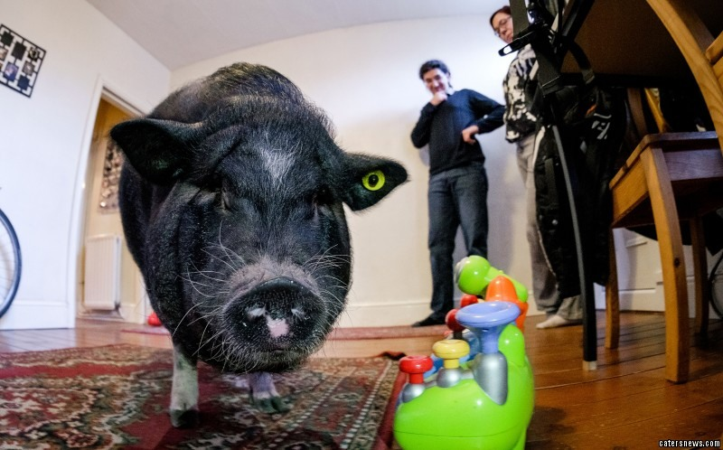 http://www.catersnews.com/wp-content/uploads/2015/01/0_CATERS_LUDWIG_PIG_06-800x498.jpg