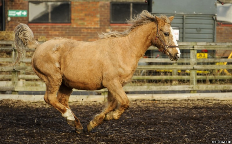 "Sue Burton, founder of the sanctuary, said: ""Orchid knows her own mind which is great to see for a horse of her age."""