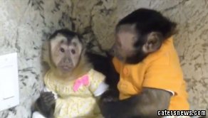 The older monkey comforts his friend, who's is feeling down
