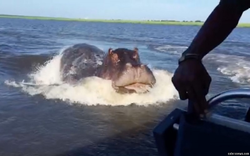 The video shows the hippo diving underwater and careering towards the camera