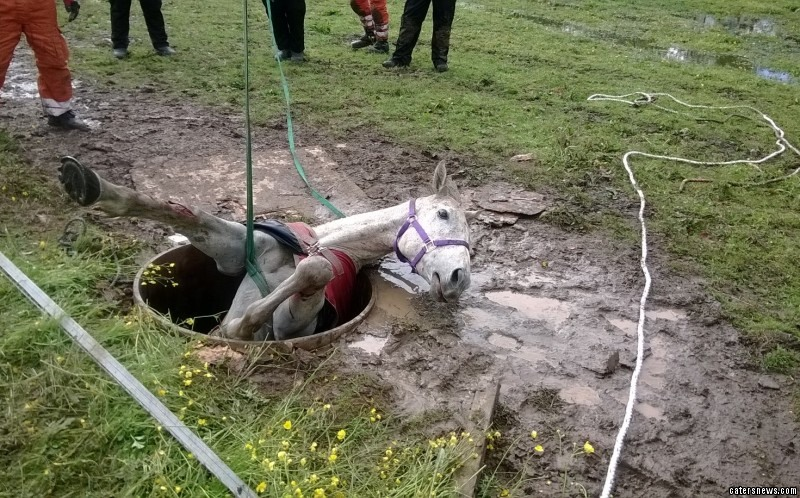 Incredible Horse Recovery