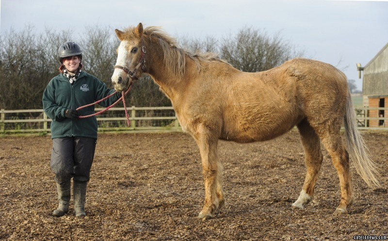 Long In The Hoof Meet Orchid The World S Oldest Horse Going