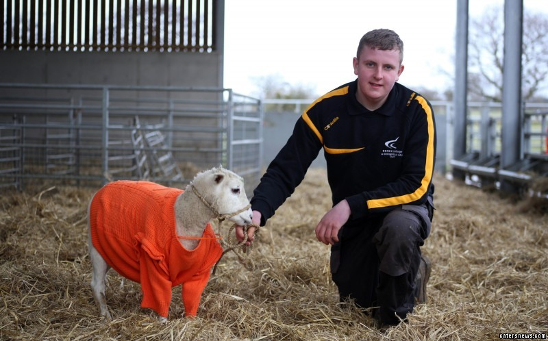 The lamb's medication caused his fleece to fall out, leaving him bald and shivering