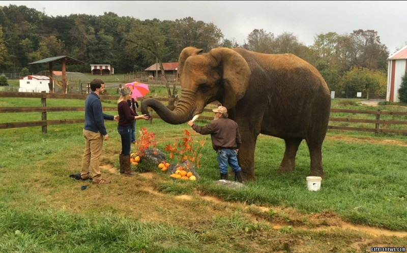 The moment the elephant helped the man to propose
