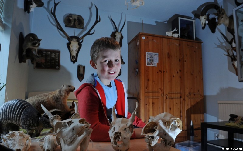 Archie Crawford shares his bedroom with 75 stuffed animals