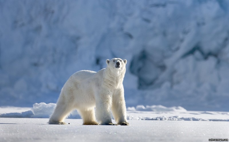 "Heinrich Eggenfellner, the 49-year-old videographer from Norway, said: ""I have encountered polar bears many times every year since I live up here and am used to them. This episode, however, was extraordinary."""
